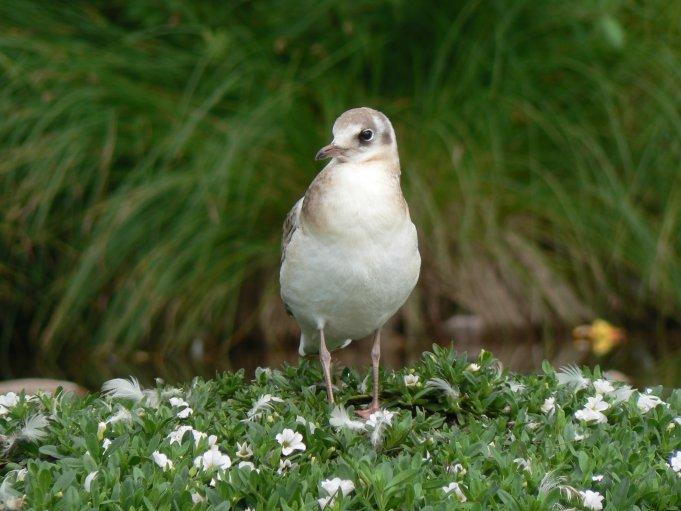 Fågel; Foto: Andreas Rejbrand