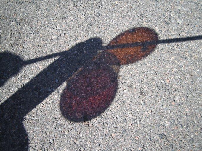 Ballonger som avbildas på marken; Foto: Andreas Rejbrand