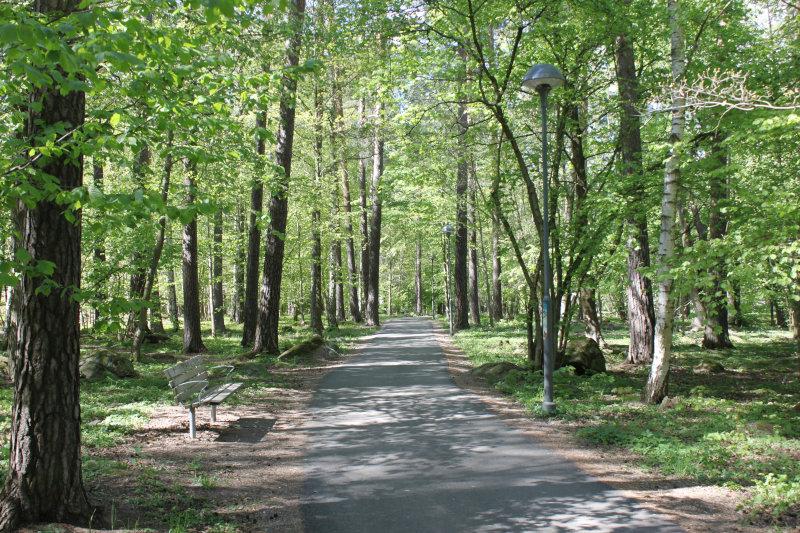 En slingrande asfalterad gångväg genom ett grönskande skogsparti en dag i slutet av maj. Otaliga lövträd, varav en björk, omger gångvägen och marken är även den täckt av grönska. Några mossbeklädda stenblock ligger mellan träden. En parkbänk står till vänster; två moderna lyktstolpar syns på höger sida.