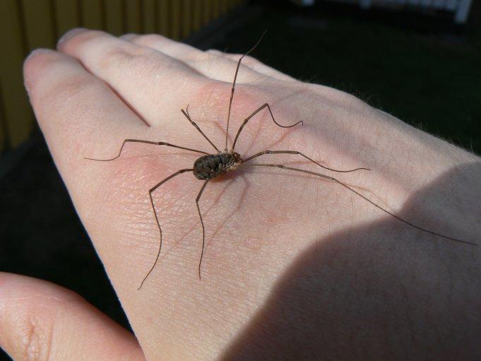 Spindel på mänsklig hand; Foto: Andreas Rejbrand