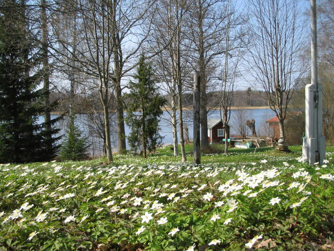 Sommarstuga; Foto: Andreas Rejbrand