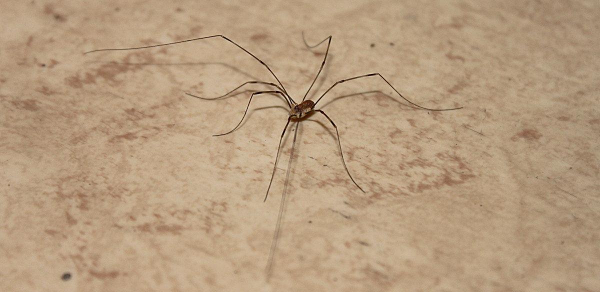 En lockespindel på mitt hallgolv.