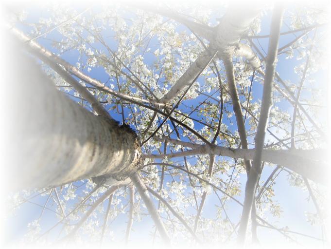 Träd; Foto: Andreas Rejbrand